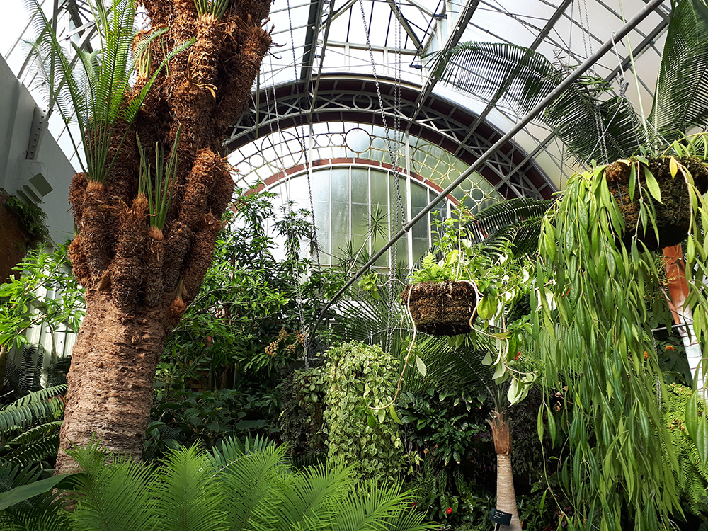 a view of the plants in the glasshouse of the Fernery at Auckland Domain