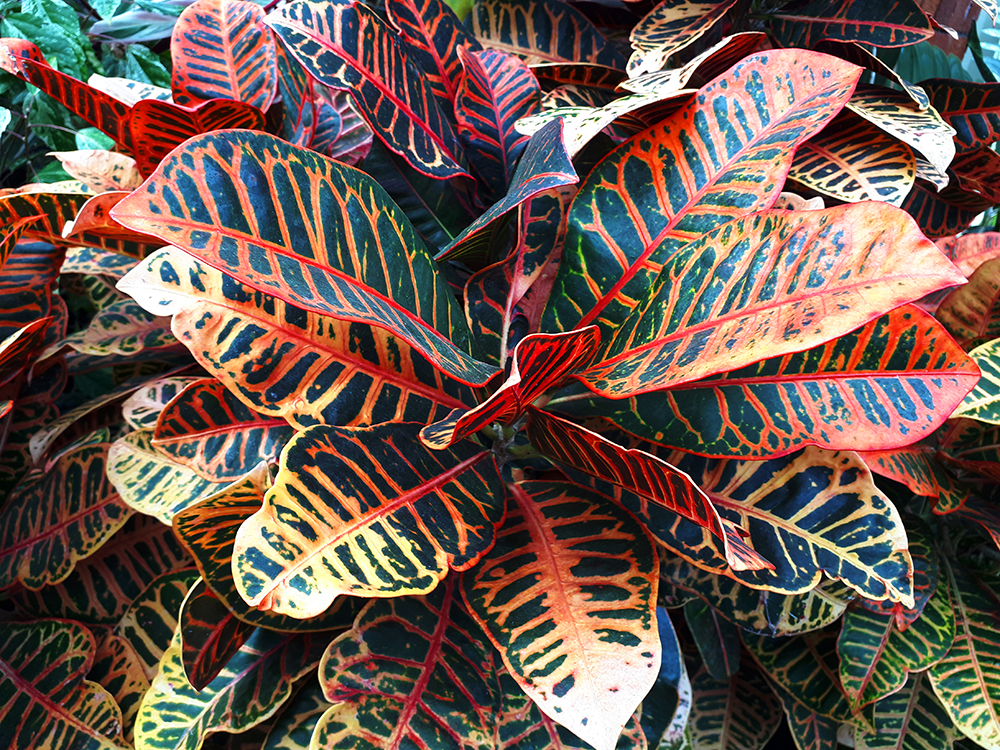 beautiful leaves of red, yellow, and green