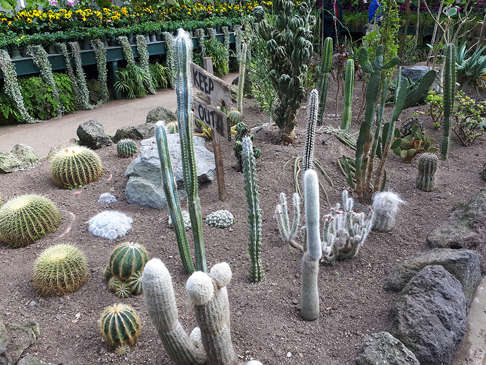 a group of various cactus species in the Auckland Domain Winter Garden