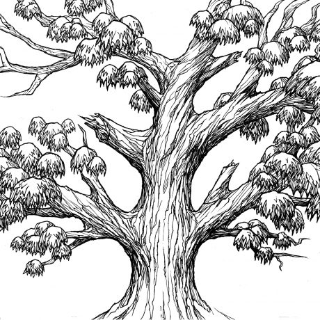 An ink drawing of a large, old growth black and white jungle tree
