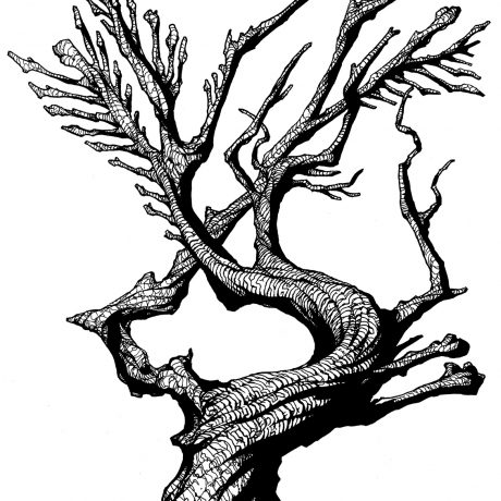 An ink drawing of a black and white twisted bone tree from my sketchbook project