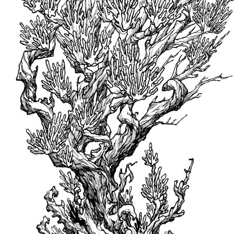 An ink drawing of a black and white twisted swamp tree from my sketchbook project