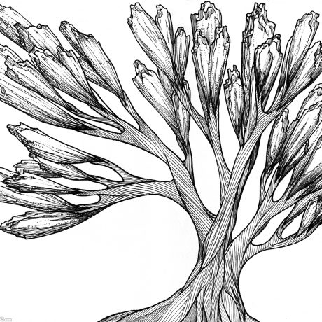 An ink drawing of a black and white succulent like tree from my sketchbook project